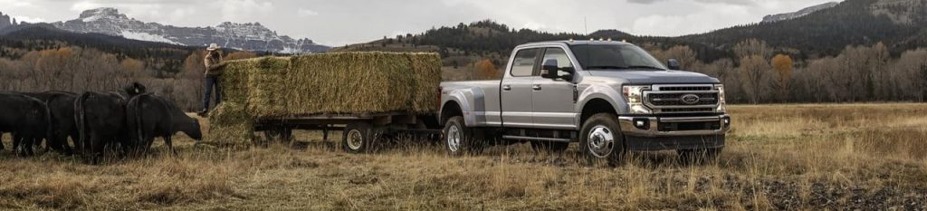 Farm Trucks and Cattle